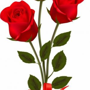 3 Red roses full size- for anniversary wedding and valentine